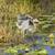 kócsag · mocsár · illusztráció · retro · toll · tó - stock fotó © wildnerdpix