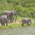 африканских · Буш · слон · Слоны · саванна - Сток-фото © wildnerdpix