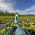 liliom · lebeg · víz · alatt · kert · nyár - stock fotó © wildnerdpix