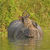 jungle mynas on an indian rhino stock photo © wildnerdpix