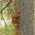 ツリー · 菌 · 森林 · 緑 · 背景 - ストックフォト © wildnerdpix
