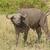 Güney · Afrika · doğa · kafa · hayvan - stok fotoğraf © wildnerdpix