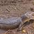американский · аллигатор · болото · удаленных · природного · живая · природа - Сток-фото © wildnerdpix