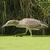 immature black crowned night heron stalking prey stock photo © wildnerdpix