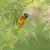 weaver bird on nest stock photo © wildnerdpix