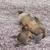baby galapagos sea lion nursing stock photo © wildnerdpix