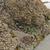 mer · faible · marée · chien · Asie · Thaïlande - photo stock © wildnerdpix