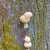 tree fungus in the forest stock photo © wildnerdpix