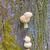 ツリー · 菌 · 成長 · 森林 · 自然 · 背景 - ストックフォト © wildnerdpix