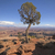 lone tree panorama stock photo © wildnerdpix