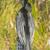 Флорида · деревья · парка · США · путешествия - Сток-фото © wildnerdpix