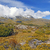 alpine vegetation below cloud shrouded peaks stock photo © wildnerdpix