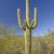 アリゾナ州 · サボテン · 青空 · 空 · 緑 · 青 - ストックフォト © wildnerdpix