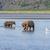 ours · confrontation · parc · Alaska · plage · joli - photo stock © wildnerdpix