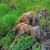 grizzly · beren · twee · noordelijk · bergen · Canada - stockfoto © wildnerdpix