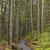 path into a coastal rain forest stock photo © wildnerdpix