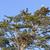 careca · Águia · retrato · pássaro · preto · cabeça - foto stock © wildnerdpix