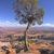 lone tree on a canyon rim stock photo © wildnerdpix