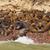 sea lion colony ona remote island stock photo © wildnerdpix