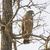 vogel · buit · groot · zwarte · adelaar - stockfoto © wildnerdpix
