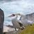 волнистый · попугайчик · пару · довольно · птиц · глаза · любви - Сток-фото © wildnerdpix