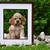 verspielt · Tennisball · Spiel · Hund · glücklich · grünen - stock foto © willeecole
