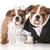 cão · noiva · noivo · inglês · para · cima - foto stock © willeecole