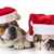 christmas dogs stock photo © willeecole