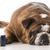 veterinary care stock photo © willeecole