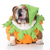 díszállat · sütőtök · halloween · halloween · tök · fehér · kutya - stock fotó © willeecole