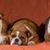 three dogs stock photo © willeecole