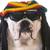 vicces · kutya · paróka · fehér · arc · fiatal - stock fotó © willeecole