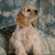 cute · cachorro · americano · sesión · verde · fondo - foto stock © willeecole