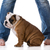 chien · boueux · pieds · bulldog · séance · blanche - photo stock © willeecole