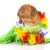 hula dog stock photo © willeecole