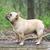 frans · bulldog · park · puppy · mannelijke · permanente - stockfoto © willeecole
