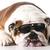 cool dog stock photo © willeecole