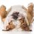 velho · cansado · cão · pastor · cabelo · triste - foto stock © willeecole