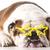 famous dog stock photo © willeecole