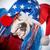 american dog stock photo © willeecole