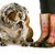 sale · bottes · chien · boueux · anglais · bulldog - photo stock © willeecole