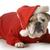 mężczyzna · angielski · bulldog · biały · psa · usta - zdjęcia stock © willeecole
