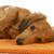 tacskó · narancs · hosszú · hajú · portré · állat · díszállat - stock fotó © willeecole