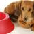 imádnivaló · kis · kutya · tacskó · stúdiófelvétel · portré · állat - stock fotó © willeecole