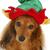 такса · собака · Hat · сидят · снега - Сток-фото © willeecole