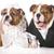 dog bride and groom stock photo © willeecole