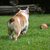 собака · погоня · щенки · другой · трава · лес - Сток-фото © willeecole