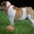 смешные · ушки · белый · собака · Постоянный · красоту - Сток-фото © willeecole
