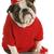 slechte · hond · gedrag · eigenaar · geïsoleerd - stockfoto © willeecole