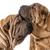 dog love stock photo © willeecole